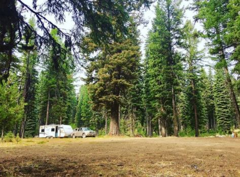 Pick up truck and RV trailer in a clearing under towering pine trees